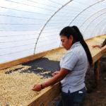 Café bio LBB Honduras Aprolma