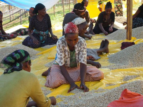 Café bio LBB Ethiopie
