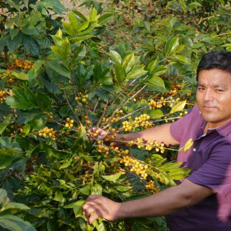 Café bio LBB Pérou Cenfrocafé