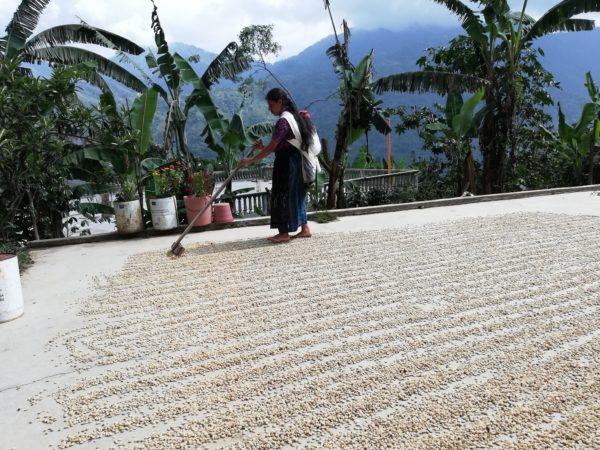 Café bio LBB Guatemala